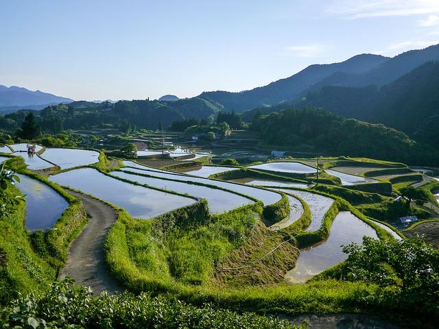 日本の田畑と稲作
